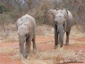 Musiara und Malkia (c) Sheldrick Wildlife Trust