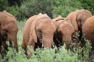 Kiasa und Mukkoka (c) Sheldrick Wildlife Trust