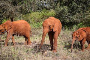 Kiasa und Olorien (c) Sheldrick Wildlife Trust