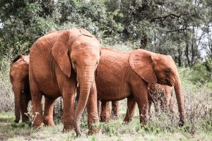 Maisha und Kiasa (c) Sheldrick Wildlife Trust