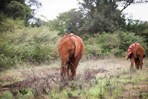 Mukkoka und Bondeni (c) Sheldrick Wildlife Trust