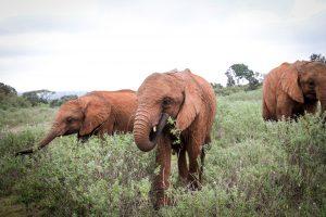Naboishu und Kiasa (c) Sheldrick Wildlife Trust