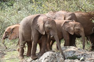 Naboishu und Roho (c) Sheldrick Wildlife Trust