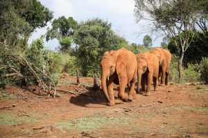 Nabulu und Larro (c) Sheldrick Wildlife Trust