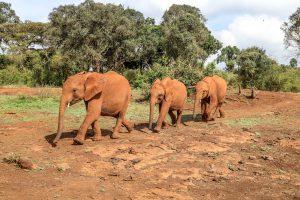 Nabulu, Larro und Maktao (c) Sheldrick Wildlife Trust
