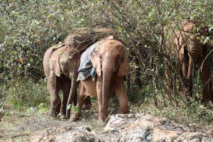 Roho und Kindani (c) Sheldrick Wildlife Trust