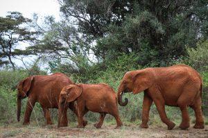 Roho und Maisha (c) Sheldrick Wildlife Trust