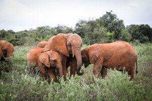Roho, Maisha und Larro (c) Sheldrick Wildlife Trust