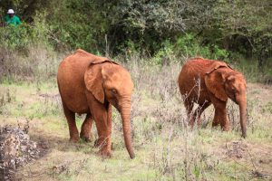 Roho und Olorien (c) Sheldrick Wildlife Trust