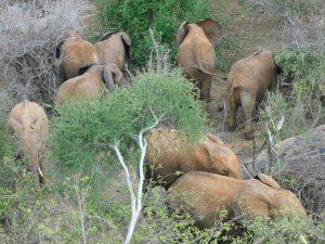 Die Waisen beim Fressen (c) Sheldrick Wildlife Trust