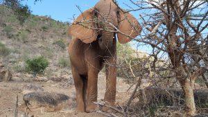 Ishaq-B (c) Sheldrick Wildlife Trust
