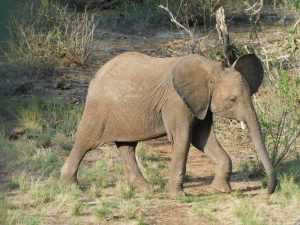 Kuishi (c) Sheldrick Wildlife Trust