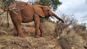 Mashariki auf dem Msinga-Berg (c) Sheldrick Wildlife Trust
