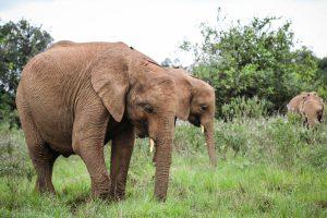 Nabulu und Maisha (c) Sheldrick Wildlife Trust