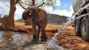 Ndotto (c) Sheldrick Wildlife Trust