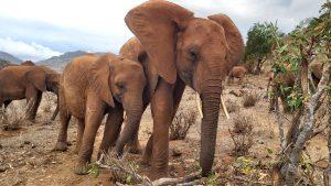 Pika Pika lehnt sich bei Kenia an (c) Sheldrick Wildlife Trust