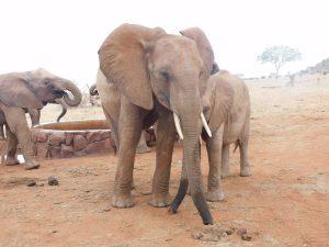 Kenia (c) Sheldrick Wildlife Trust