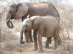 Melia und Musiara (c) Sheldrick Wildlife Trust