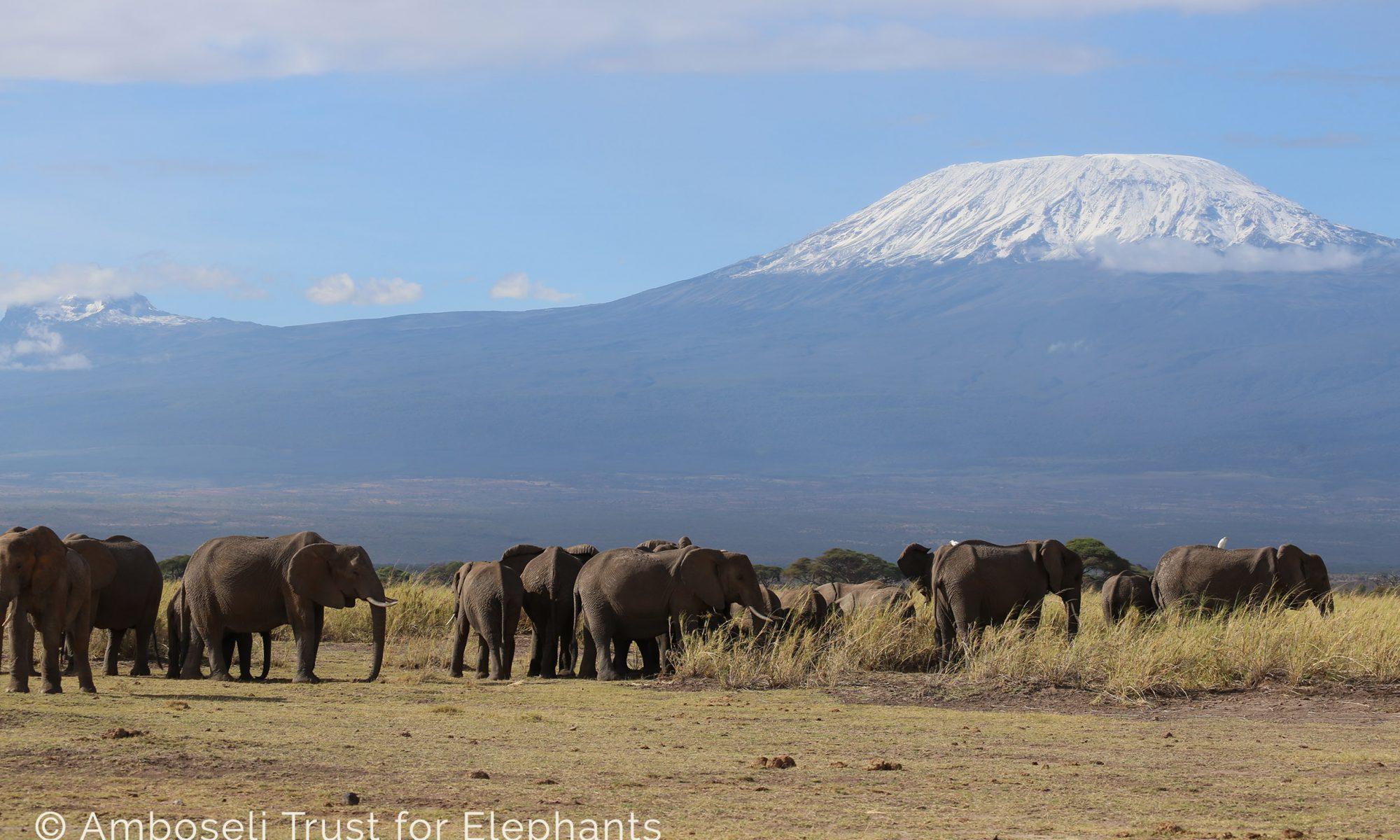 Elefanten vor dem Kilimanjaro