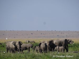 Eine Elefantenfamilie am Rand eines Sumpfes