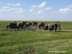 Elefanten in ihren Weidegründen