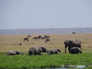 Die Amboseli-Sümpfe bedeuten Leben für unzählige Tiere